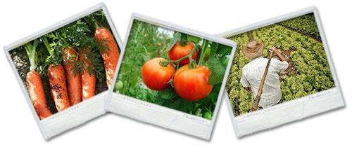 Control de calidad en el proceso de frutas y Verduras  Control de calidad en el proceso de frutas y Verduras