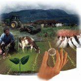 Carrera técnica SENA en Producción agropecuaria