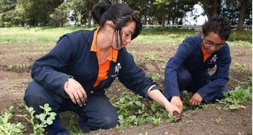cursos-para-agro-i-convocatoria-sena-2017
